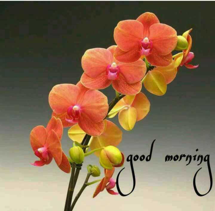 🌞 Good Morning🌞 - so good morning goed morning - ShareChat