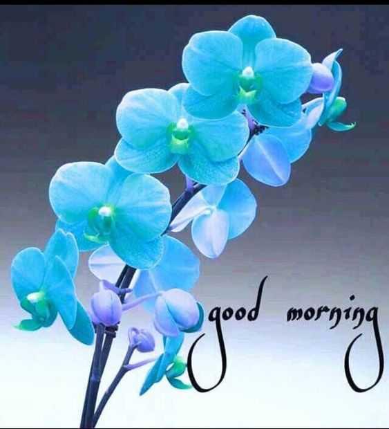 🌞 Good Morning🌞 - bG . G . Sow poob - ShareChat