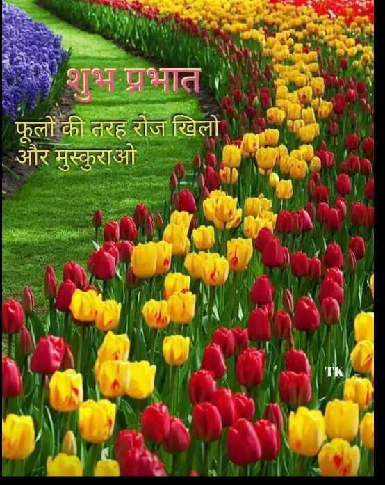 🌞 Good Morning🌞 - शुभ प्रभात फूलों की तरह रोज खिलो । और मुस्कुराओ - ShareChat