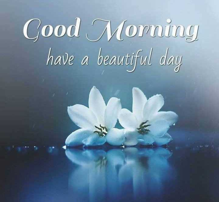 🌞 Good Morning🌞 - Cood Morning have a beautiful day - ShareChat