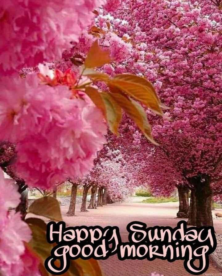 🌞 Good Morning🌞 - Happy Sunday good morning - ShareChat