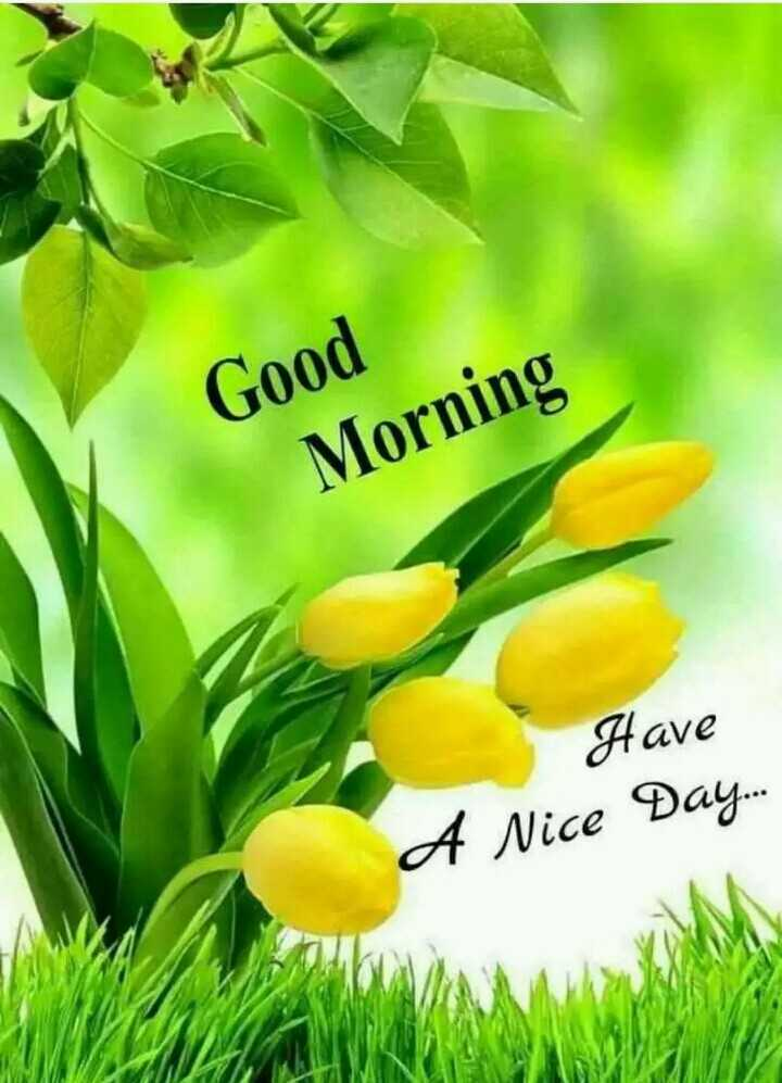 🌞 Good Morning🌞 - Good Morning Have A Nice Day . . . - ShareChat