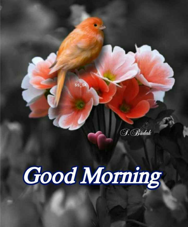 🌞Good Morning🌞 - SS _ sk S . Budak Good Morning - ShareChat