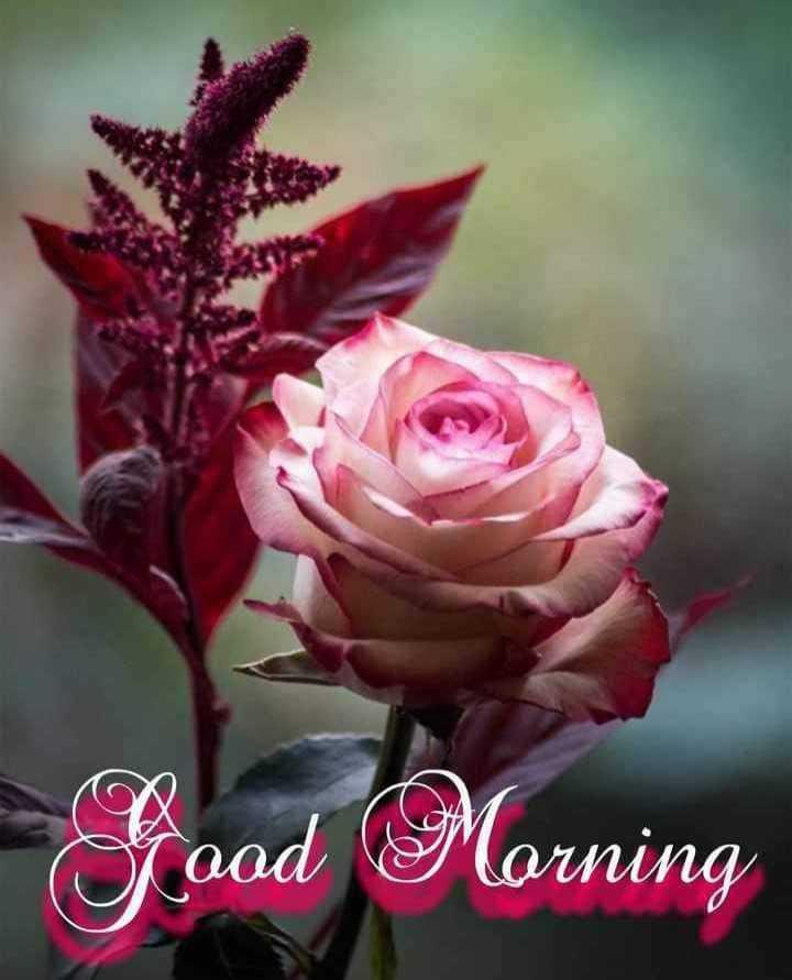 🌞Good Morning🌞 - Faod Morning Morning - ShareChat