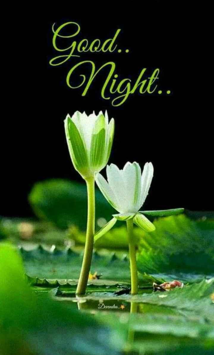 🌞Good Morning🌞 - Good . . Night . . Duda . - ShareChat