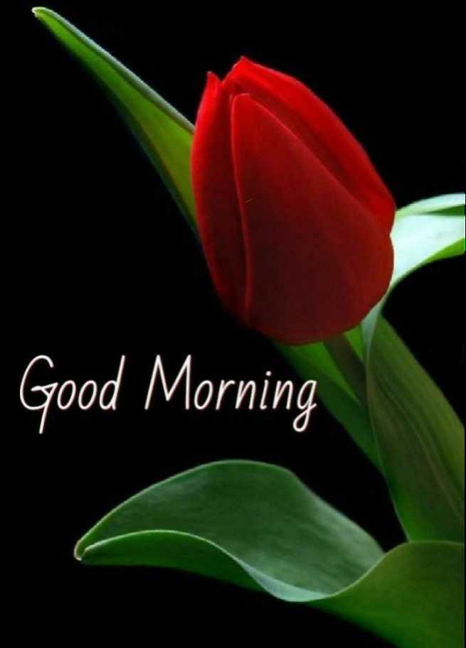 🌞 Good Morning🌞 - Good Morning - ShareChat