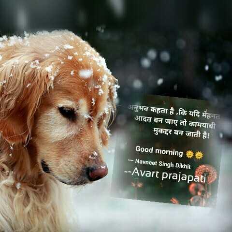 🌞Good Morning🌞 - अनुभव कहता है कि यदि मेहनत आदत बन जाए तो कामयाबी मुकद्दर बन जाती है ! Good morning * * - Navneet Singh Dikhit - - Avart prajapati - ShareChat