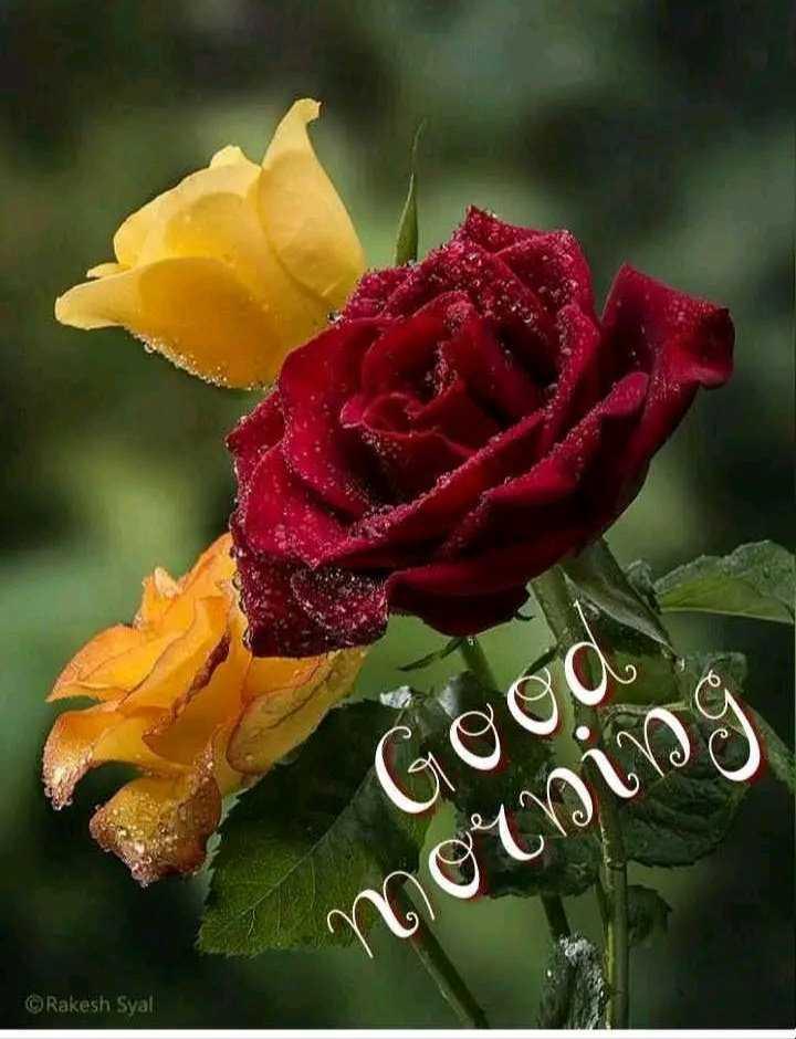 🌞Good Morning🌞 - Good morning Rakesh Syal - ShareChat