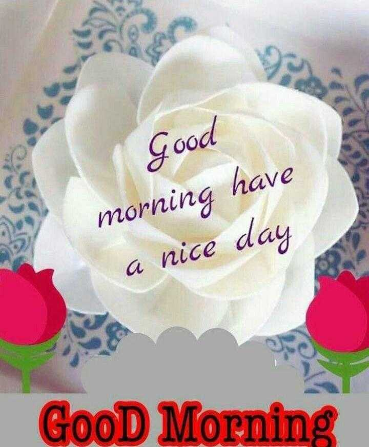🌞 Good Morning🌞 - Good morning have a nice day GooD Morning - ShareChat