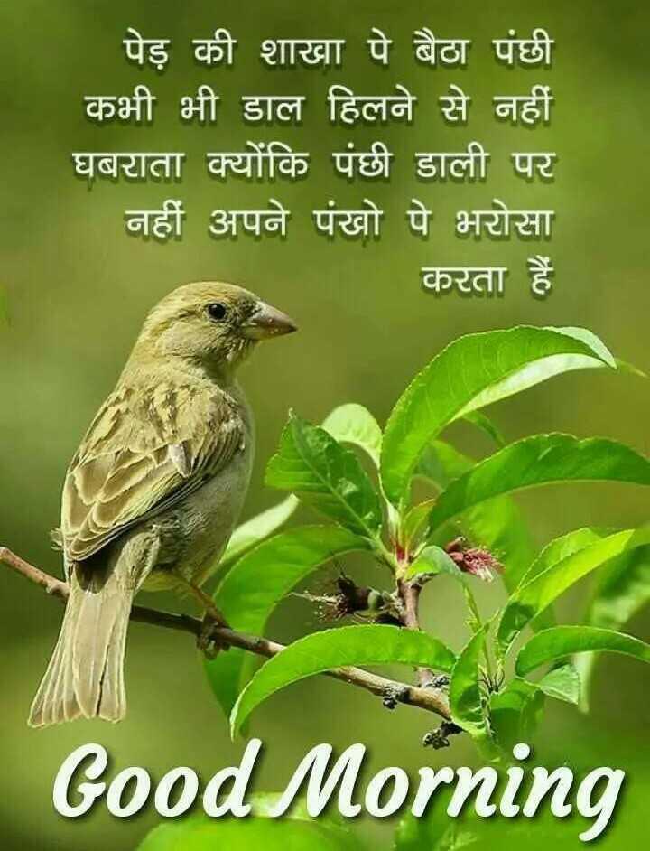 🌞Good Morning🌞 - _ _ पेड़ की शाखा पे बैठा पंछी कभी भी डाल हिलने से नहीं घबराता क्योंकि पंछी डाली पर नहीं अपने पंखो पे भरोसा करता हैं Good Morning - ShareChat