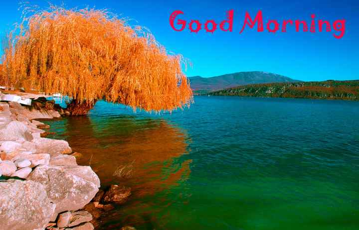 🌞 Good Morning🌞 - Good Mornare - ShareChat