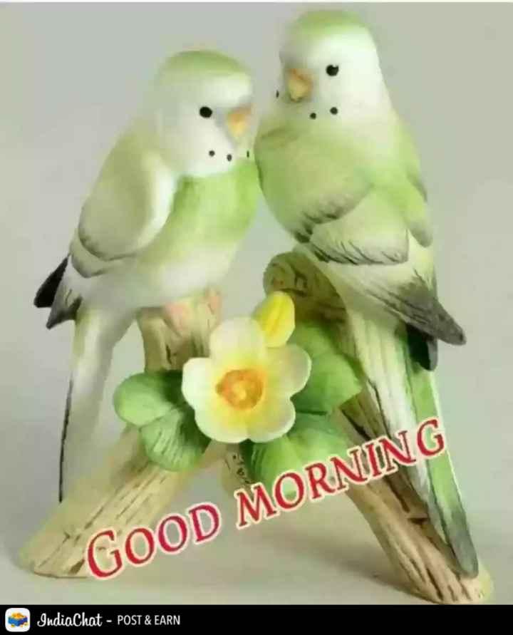 🌞Good Morning🌞 - GOOD MORNING ; - POST & EARN - ShareChat