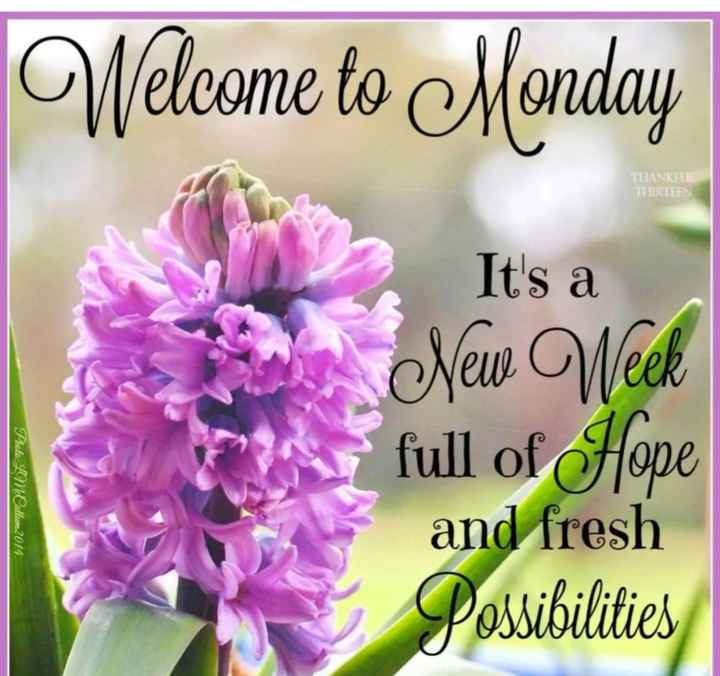 🌞 Good Morning🌞 - Welcome to Monday HANKEL THIRTEEN It ' s a New Week Photo : LMOallum2014 full of Hope and fresh Possibilities - ShareChat