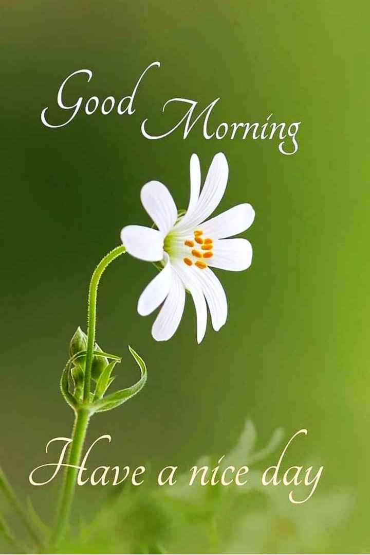 🌅 Good Morning - Good Morning Morning Have a nice day - ShareChat