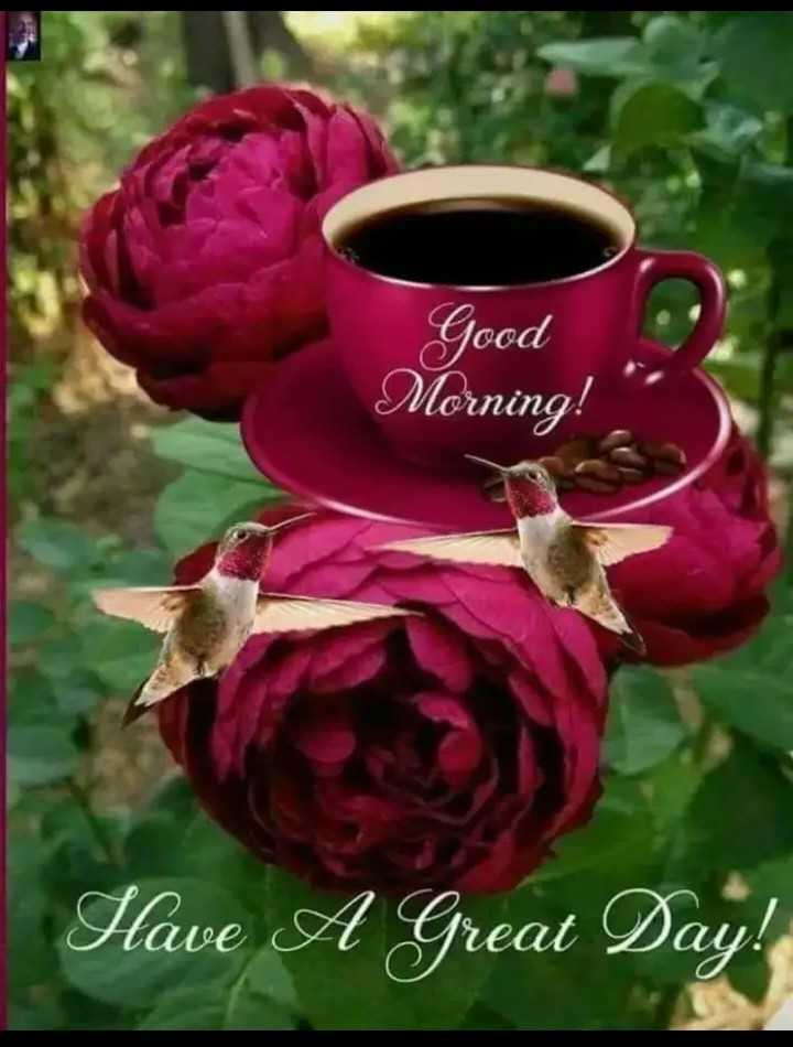 🌞 Good Morning🌞 - Good Morning ! Have A Great Day ! - ShareChat
