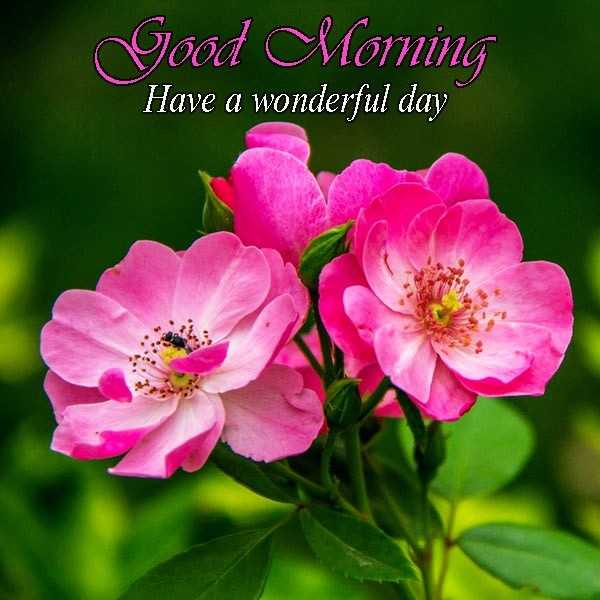 🌞 Good Morning🌞 - Good Morning Have a wonderful day - ShareChat