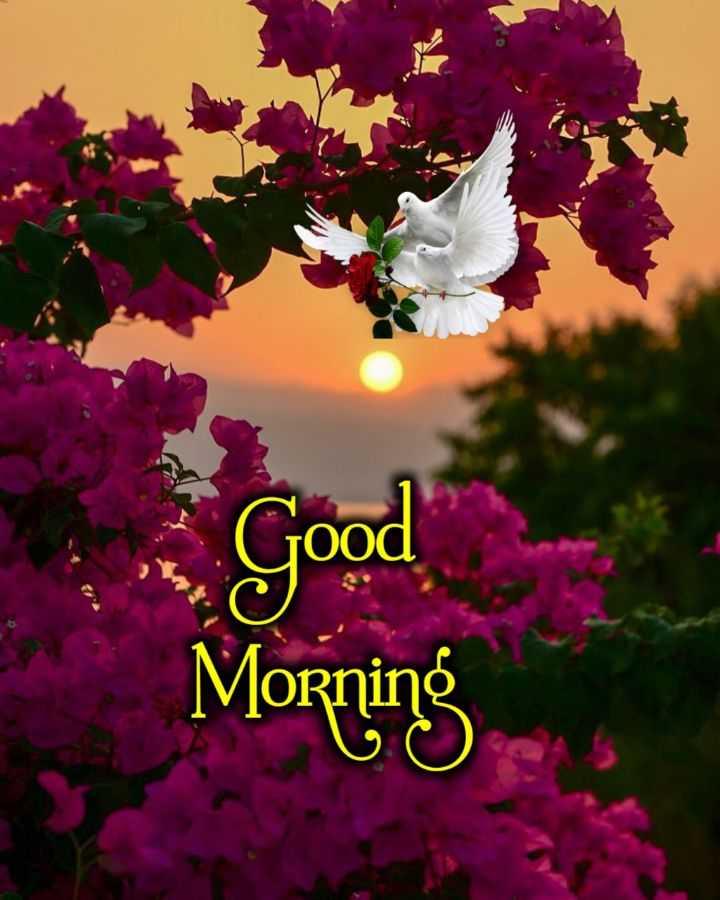 🌞 Good Morning🌞 - Good ood Morning - ShareChat