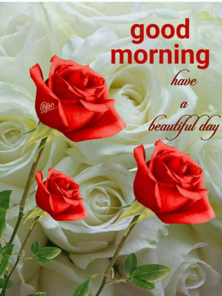 🌞 Good Morning🌞 - good morning have beautiful day - ShareChat