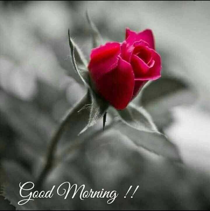 🌞 Good Morning🌞 - Good Morning ! ! - ShareChat