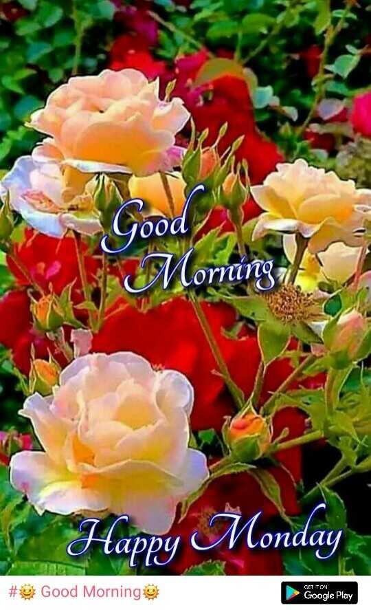 🌞 Good Morning🌞 - pood Morning / / Happy Monday GET TON # Good Morning Google Play - ShareChat