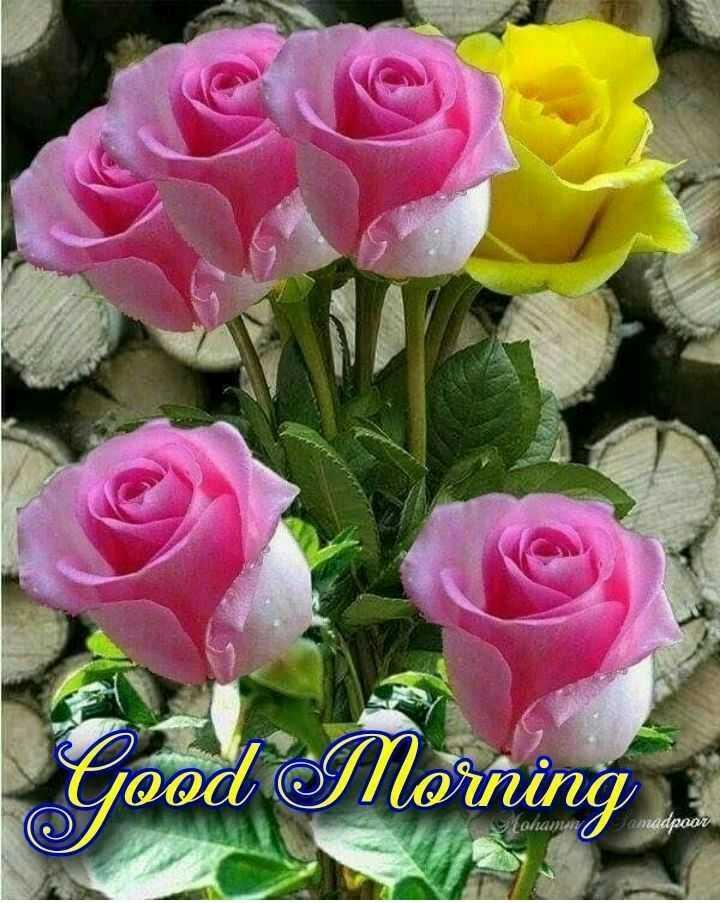 🌞 Good Morning🌞 - Good Morning Qi / n adpoor - ShareChat