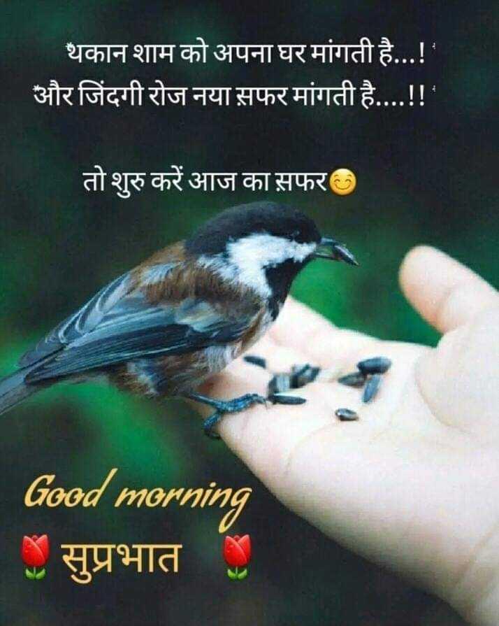 🌞Good Morning🌞 - थकान शाम को अपना घर मांगती है . . . ! ' और जिंदगी रोज नया सफर मांगती है . . . . ! ! ' । तो शुरु करें आज का सफर Good morning | सुप्रभात - ShareChat