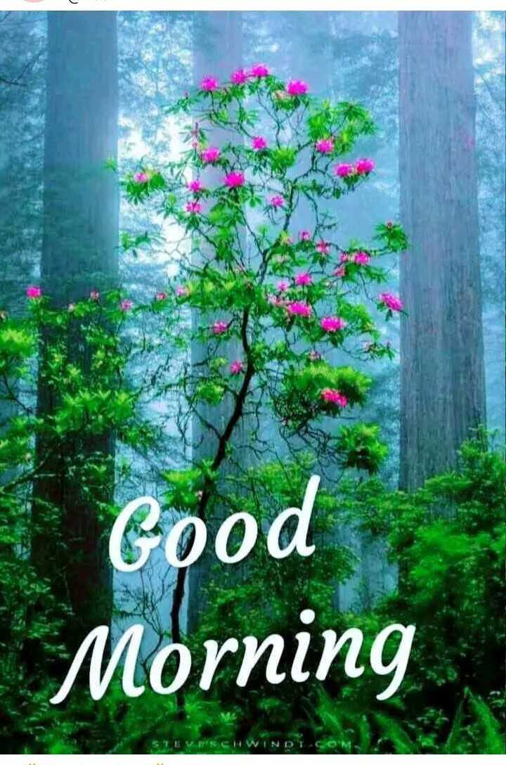 🌞Good Morning🌞 - * Good Morning - ShareChat