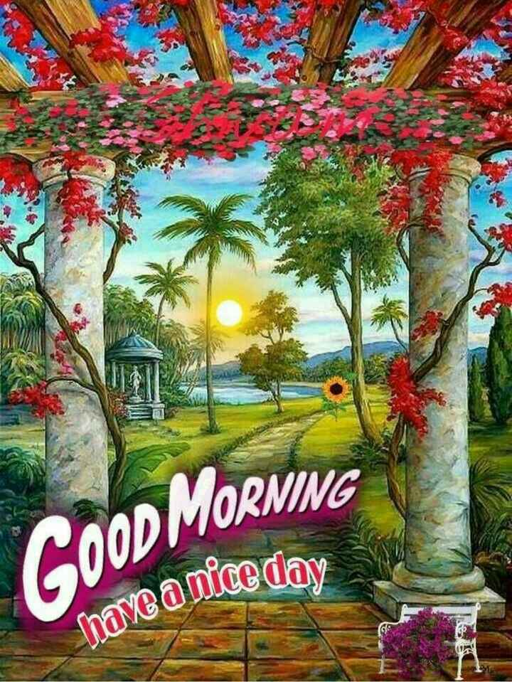 🌞Good Morning🌞 - COOD MORNING have a nice day - ShareChat