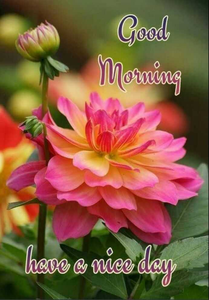 🌞 Good Morning🌞 - Good Morning There a nice day - ShareChat