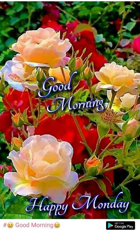 🌞 Good Morning🌞 - vood Morning Happy Monday tani Conday N # Good Morning GET TON Google Play - ShareChat