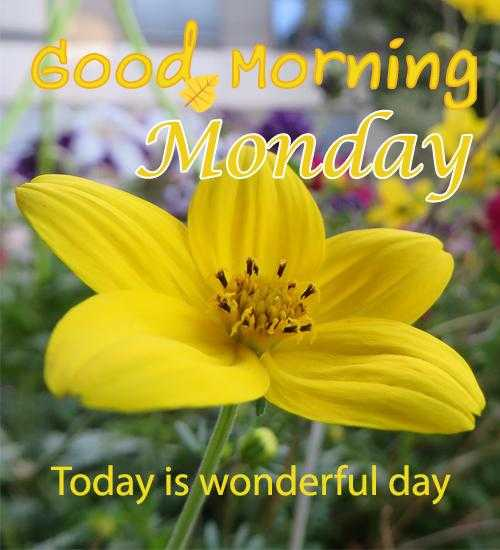 🌞 Good Morning🌞 - Good Morning Monday Today is wonderful day - ShareChat