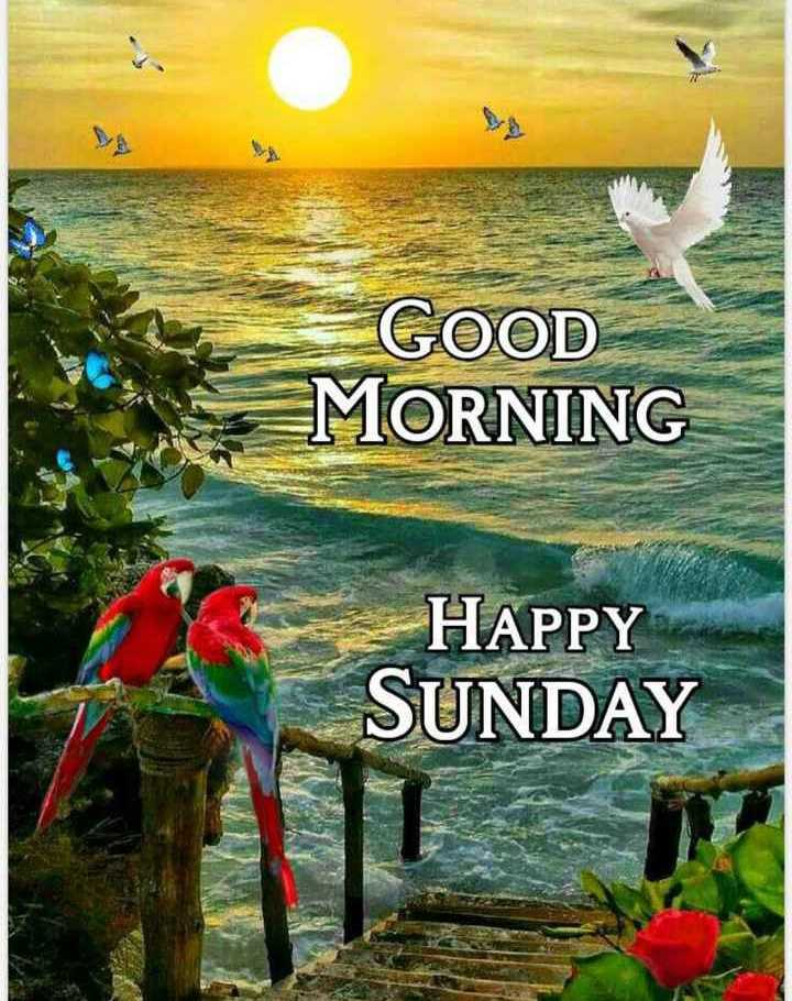 🌞Good Morning🌞 - GOOD MORNING HAPPY SUNDAY - ShareChat