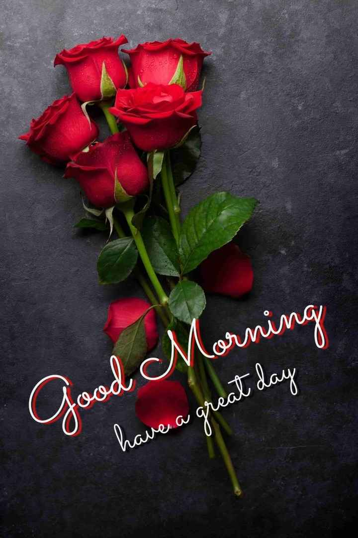 🌞Good Morning🌞 - Morning Good have a great day - ShareChat