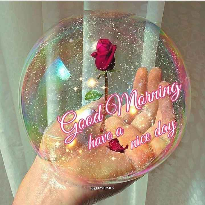 🌞 Good Morning🌞 - Morning Joe have a nice day AZEEWIPARK - ShareChat