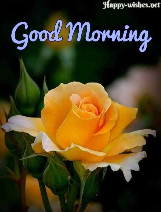 Good morning 🍫 - Happy - wishes . net Good Morning - ShareChat