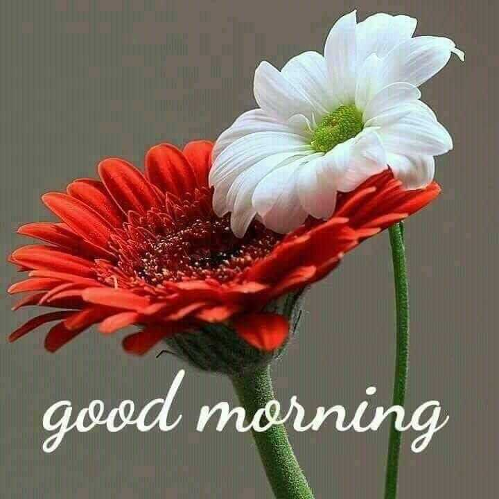 Good morning 🍫 - good morning - ShareChat