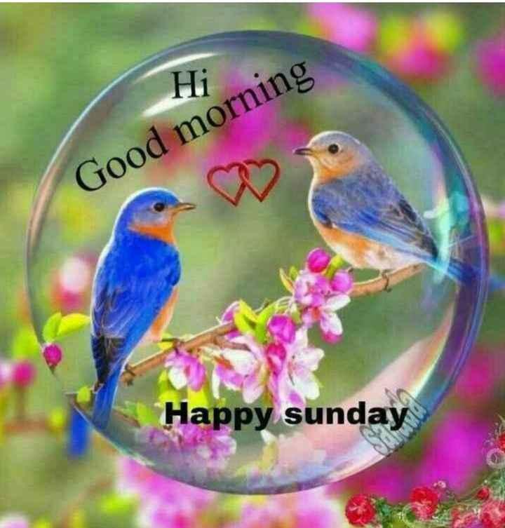 Good morning 🍫 - Hi Good morning Happy sunday - ShareChat