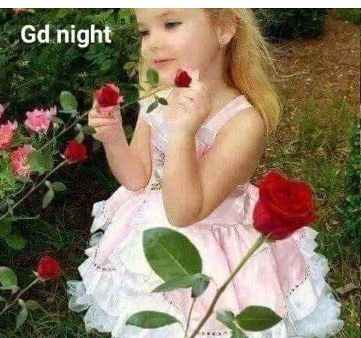 Good night - Gd night - ShareChat