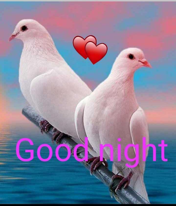 Gud Night - Gooonight - ShareChat