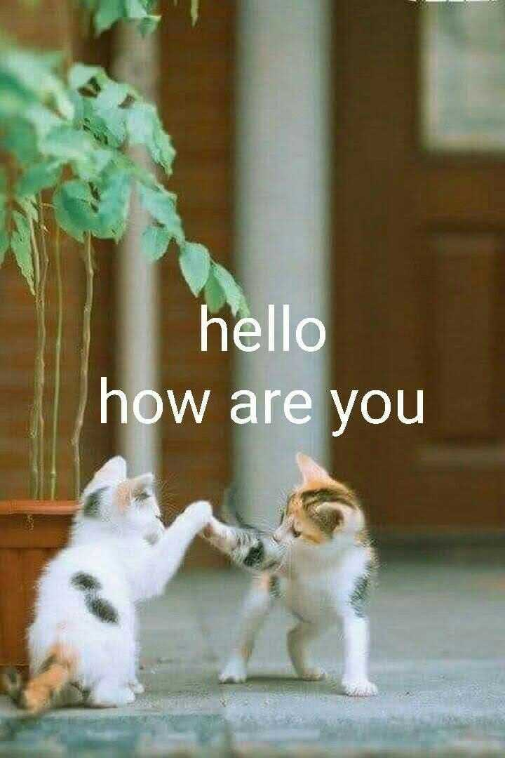 HOW ARE YOU FRIENDS - hello how are you - ShareChat
