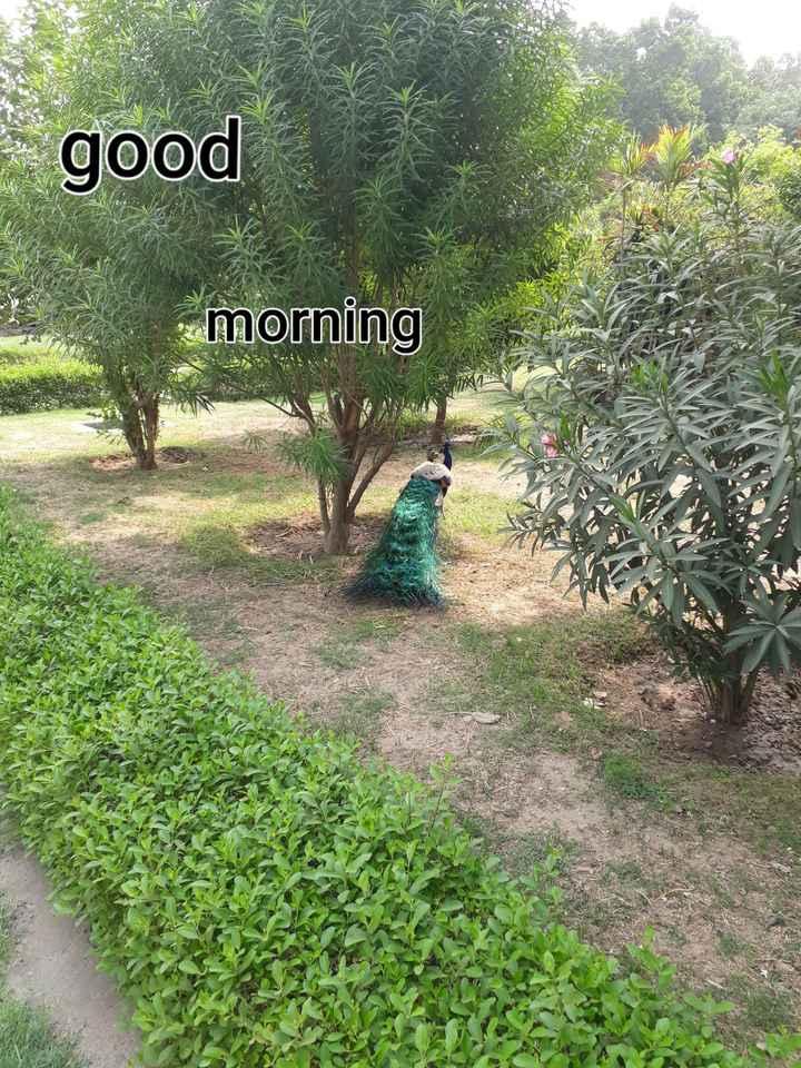 Happy Breakup Day - good morning - ShareChat