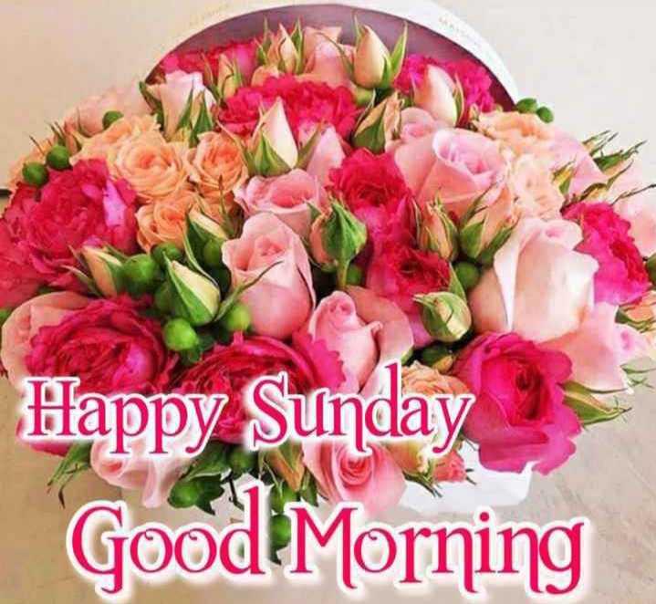 Happy Sunday - Happy Sunday Good Morning - ShareChat