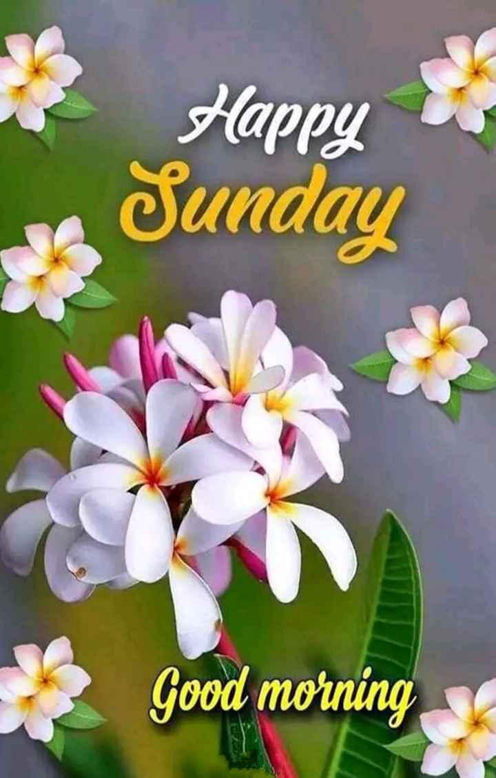 Happy Sunday - Happy s Sunday Good morning - ShareChat