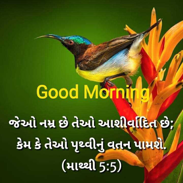 ⛪ Holy Jesus - Good Morning ' જેઓ નમ્ર છે તેઓ આશીર્વાદિત છે ; ' કેમ કે તેઓ પૃથ્વીનું વતન પામશે . ' ( માથ્થી 5 : 5 ) - - ShareChat