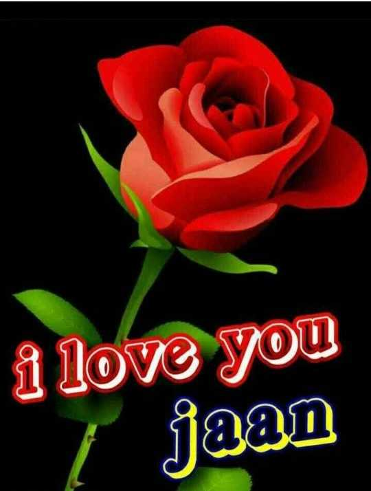 🌹 I Love You - i love you [ jaan - ShareChat