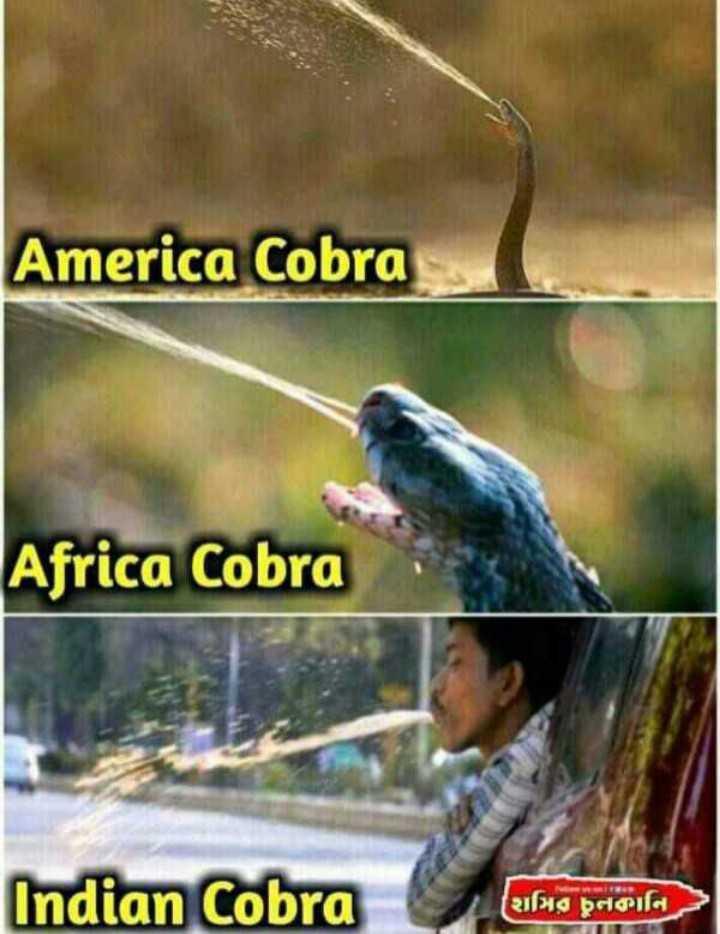 😂JCB Memes - America Cobra Africa Cobra Indian Cobra ( મિતું નથનિટે - ShareChat