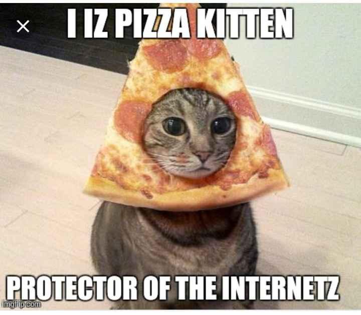 🐱Kitten डे - * HIZ PIZZA KITTEN PROTECTOR OF THE INTERNETZ mgfip . com - ShareChat