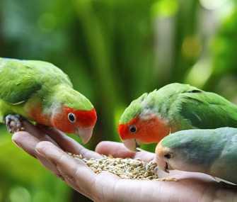 💞 Love Birds 💞 - ShareChat
