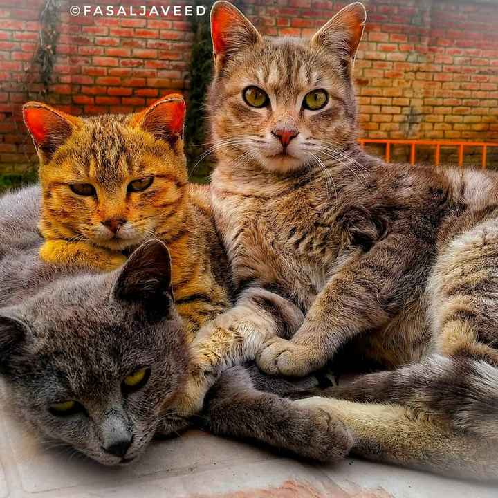 📱Mi ਲਵਰਜ਼ - © FASALJAVEED - ShareChat