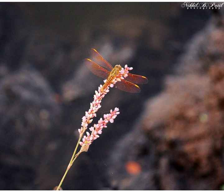 Nature Photography - Nikhil . B : Patil - ShareChat